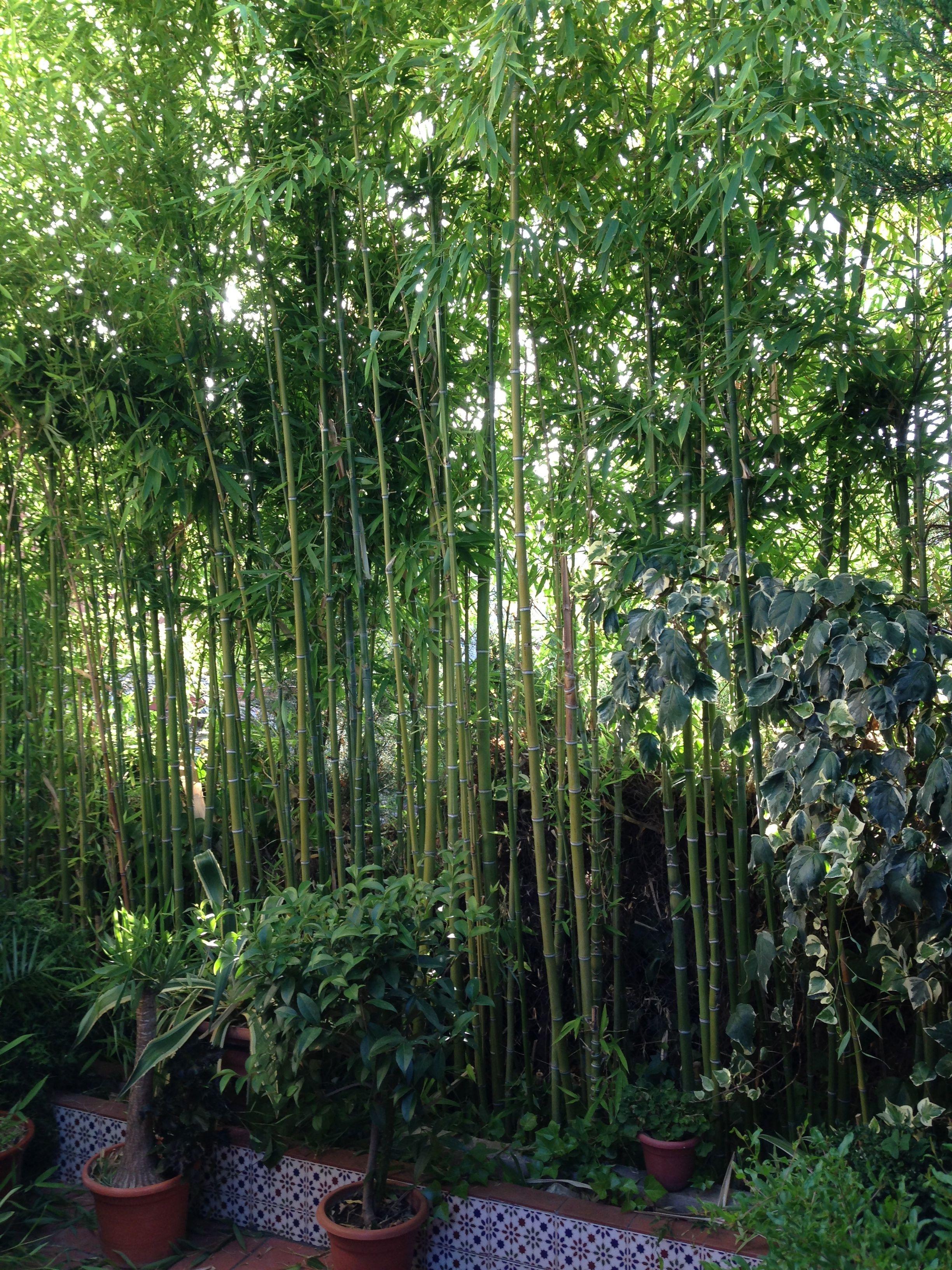 Maravilloso Bosque de Bambú