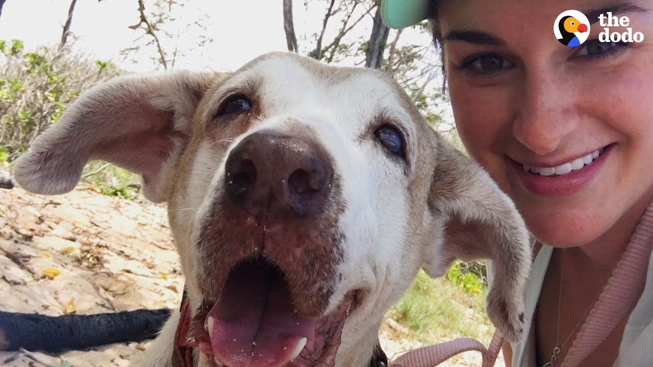 Dog Who Spent 7 Years In The Shelter Is So Happy To Have A Family The Dodo Faith Restored Youtube Dog Waiting Dogs Happy Dogs