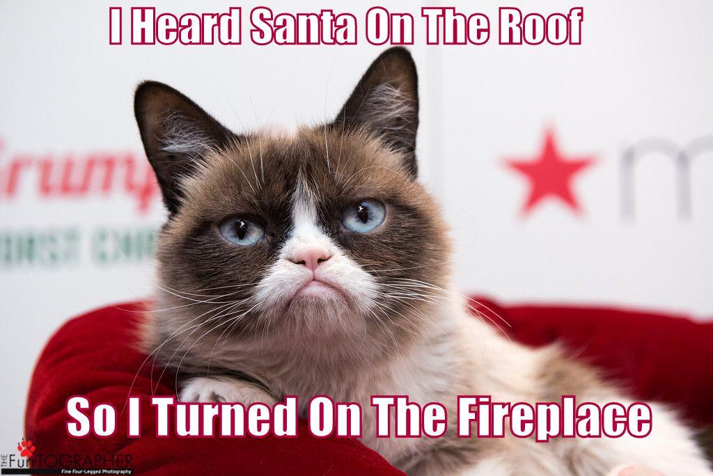 Dashing Through The NO♫ Grumpy cat christmas, Grumpy cat