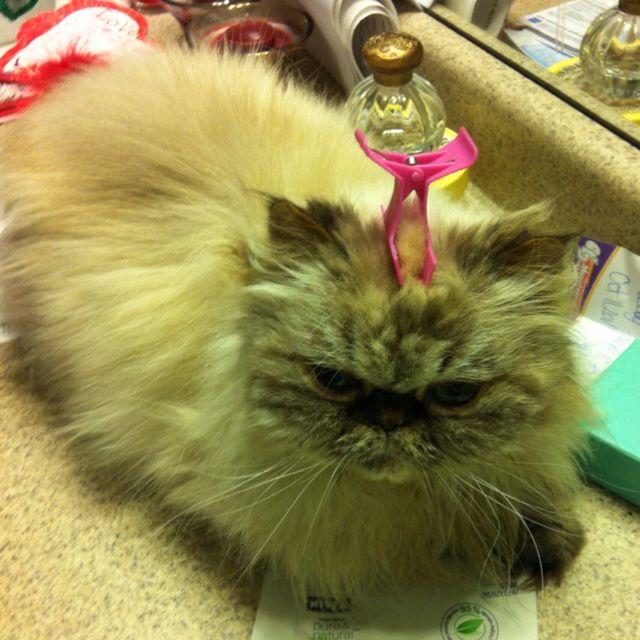 Cute.... CATrina