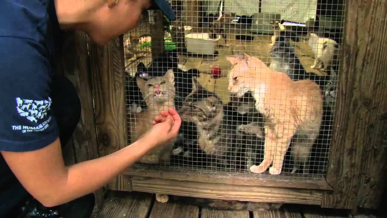 700 Cats Rescued From Cruelty in Florida Animal rescue