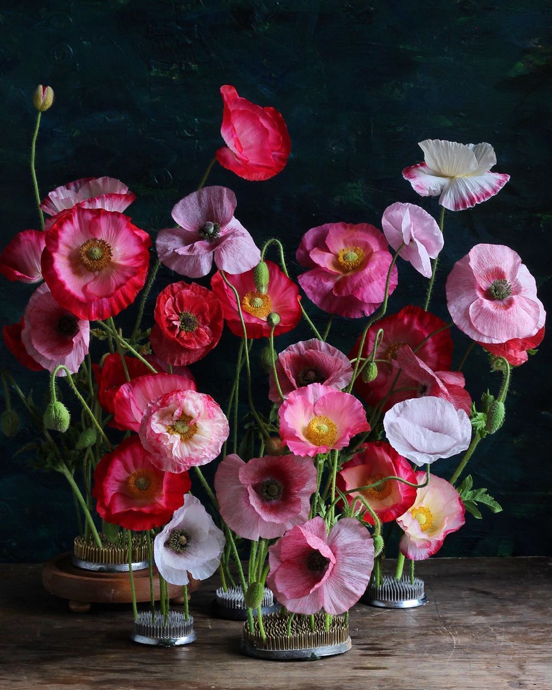If You Look Incessantly For Variety Sooner Or Later You Will Discover That You Need More Wisdom Fausto Cercignani O Flower Images Amazing Flowers Flowers