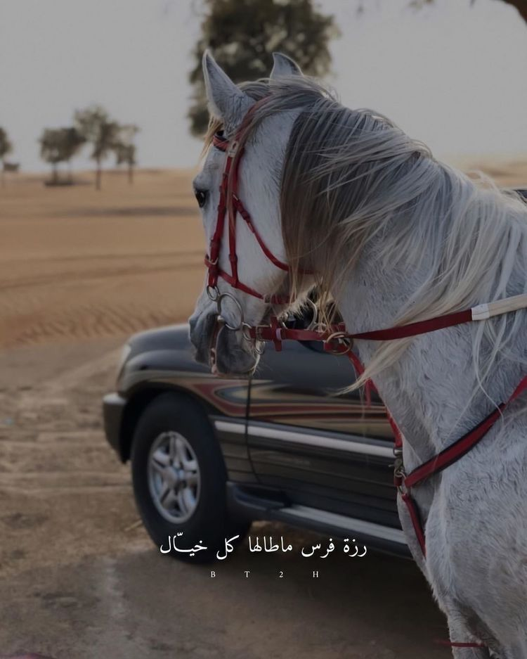 Pin By سليمان On خيول Horse Senior Pictures Horse Girl Photography Horse Wallpaper