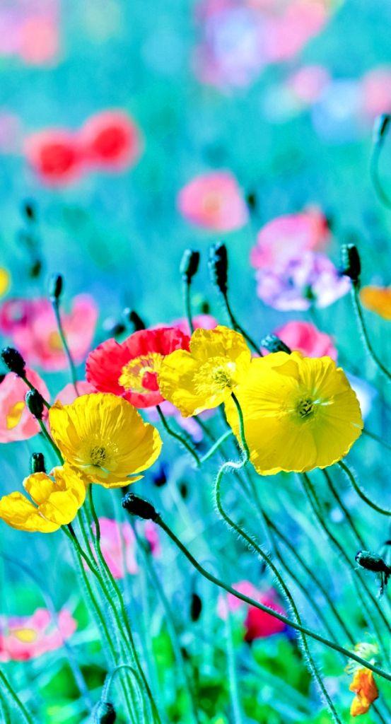 Pretty summer flowers nature pinterest spring flowers and flower pretty summer flowers mightylinksfo