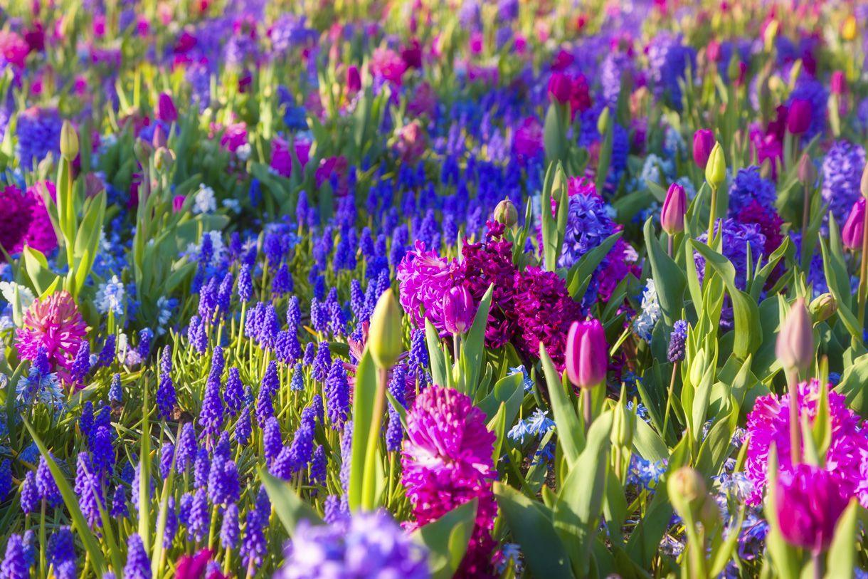 9 bulbes à floraison printanière inratables Bulbes