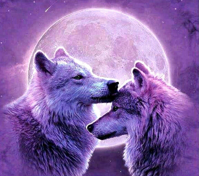 SÜße Wölfe lila Hintergrund einfach traumhaft schön | Tiere ...
