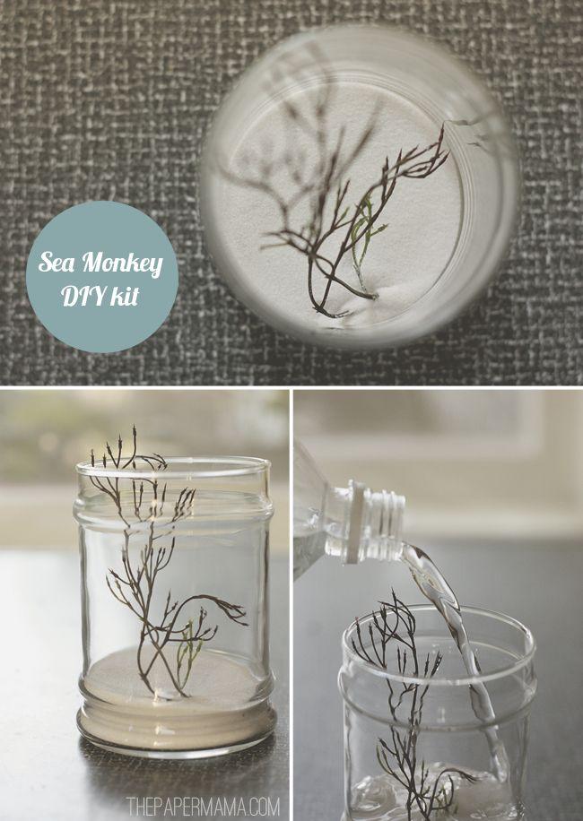 Diy Sea Monkey Kit Much Cuter Than The Store Bought Sea Monkeys Diy Tank Pet Accessories