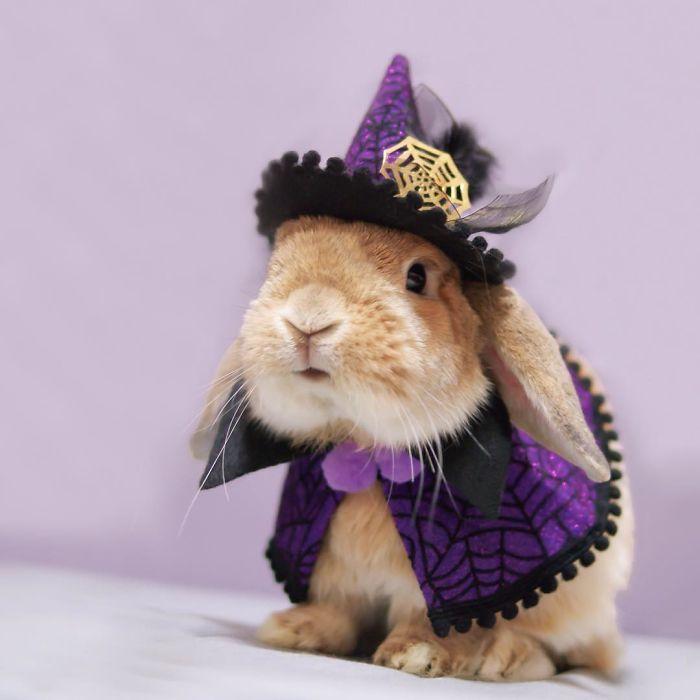 Witchy bunnnaayyy!