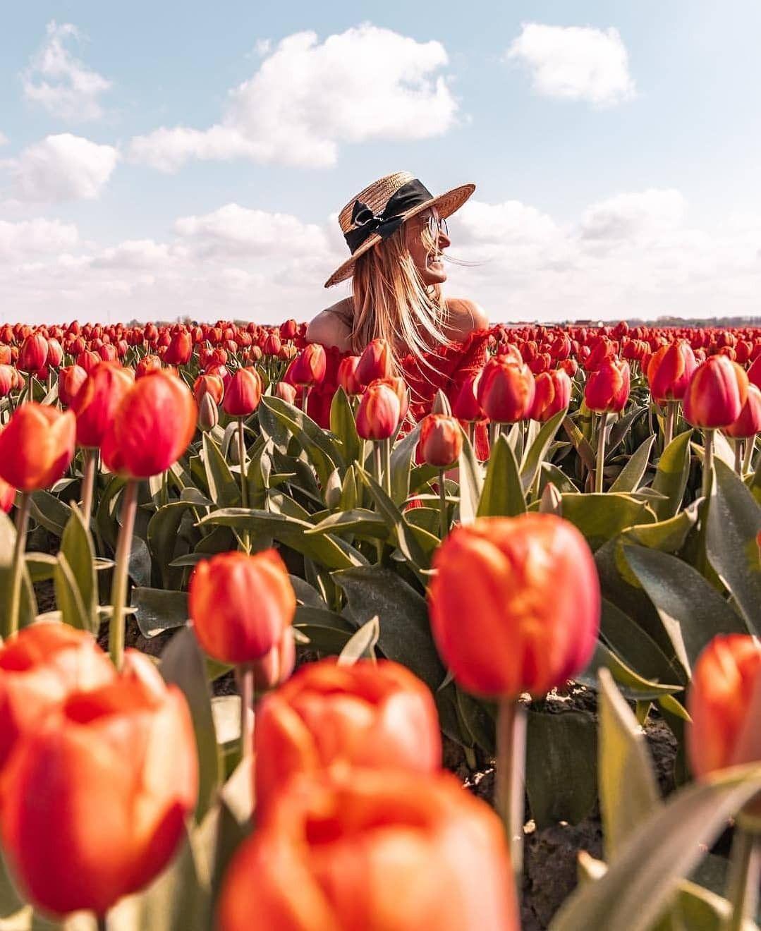 Goeree Bulb flowers, Tulips, Tulip fields