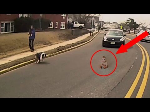 Unbelievable Animals That Saved Lives Youtube Cry Youtube