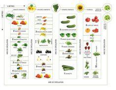 Photo of Comment placer vos légumes dans votre potager ?