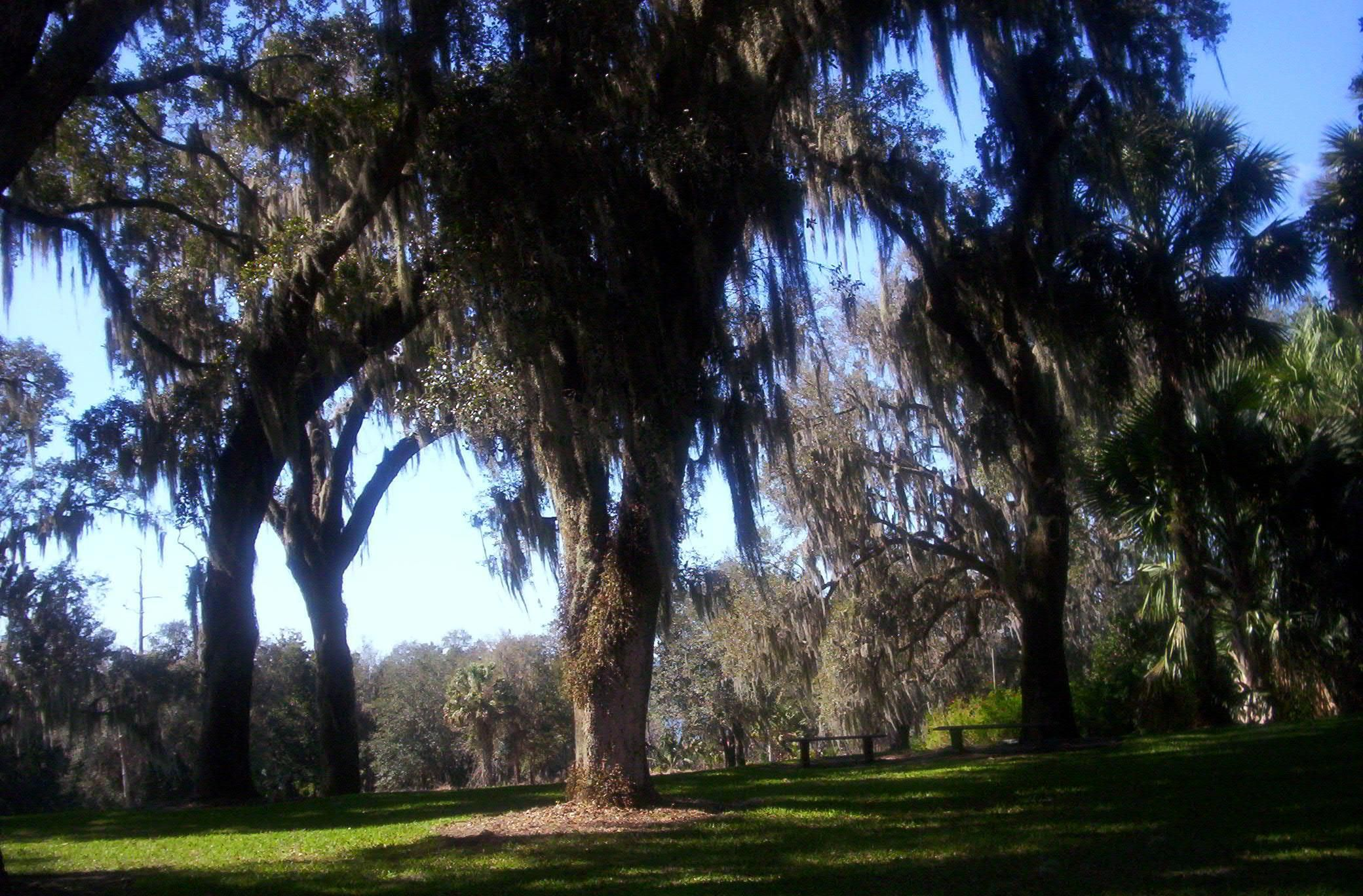 Spanish moss hangs in shaded areas for sitting at Bok Tower