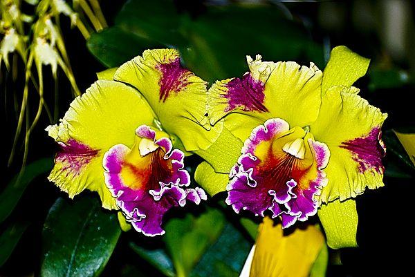 Orquid By Riccardo Zullian Orchids Beautiful Flowers Flower Power