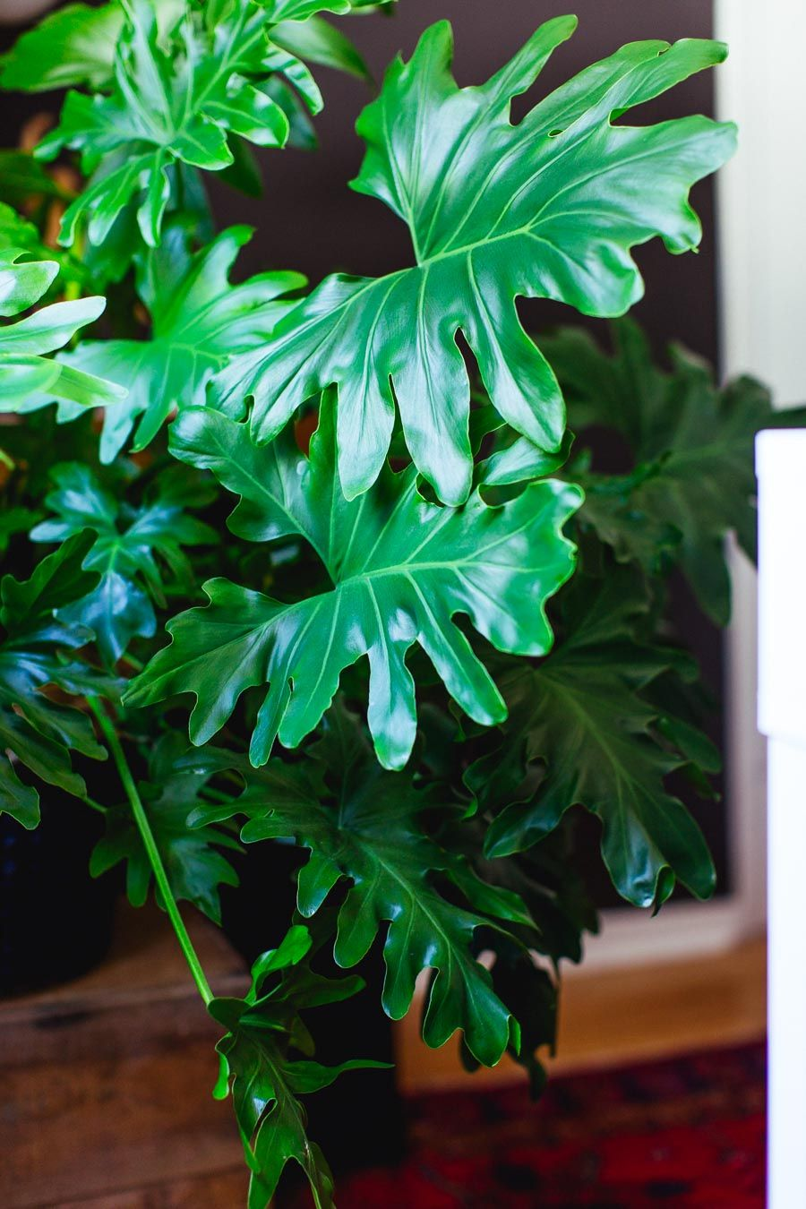 Tips s and philodendrons to succulents jades pothos zz plants