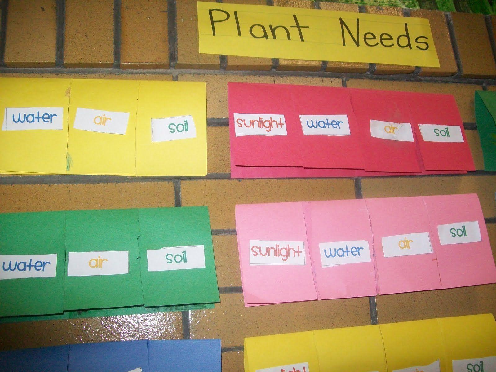 plant needs foldable