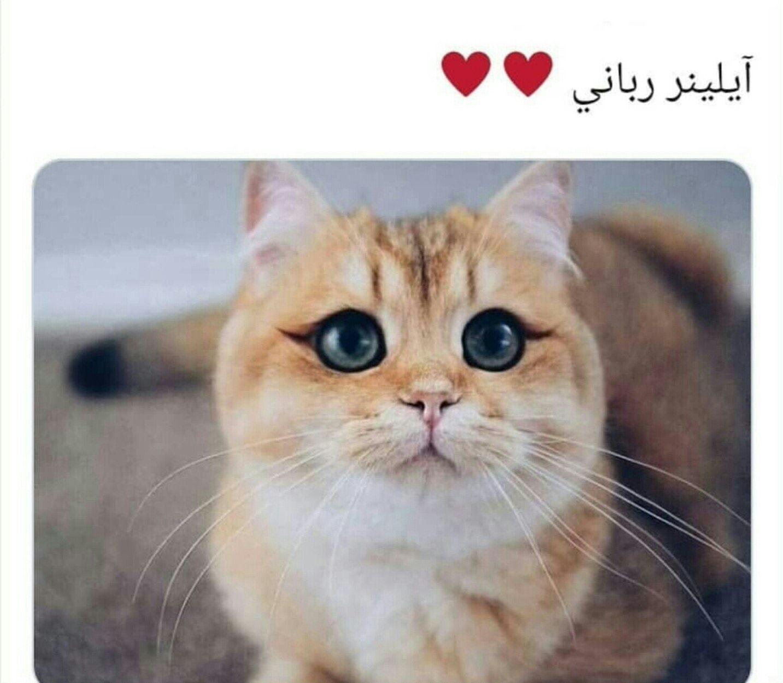Pin by صورة و كلمة on ابتسامة ☺ ᴗ̈ Funny Cute animals
