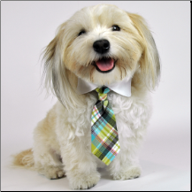 doggie in a tie...adorable