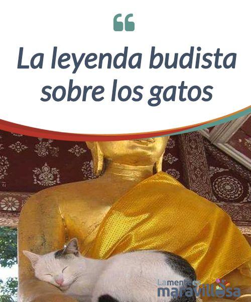 La Leyenda Budista Sobre Los Gatos Gatos Leyendas Cosas Para Gatos