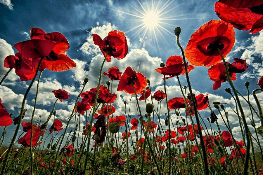 Where flowers meet the sky