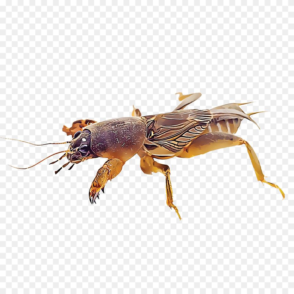 Mole Cricket Png Todos Los Insectos 1000 1000 Png Download Free Transparent Background Mole Cricket Png Png Download Mole Cricket Png Animals