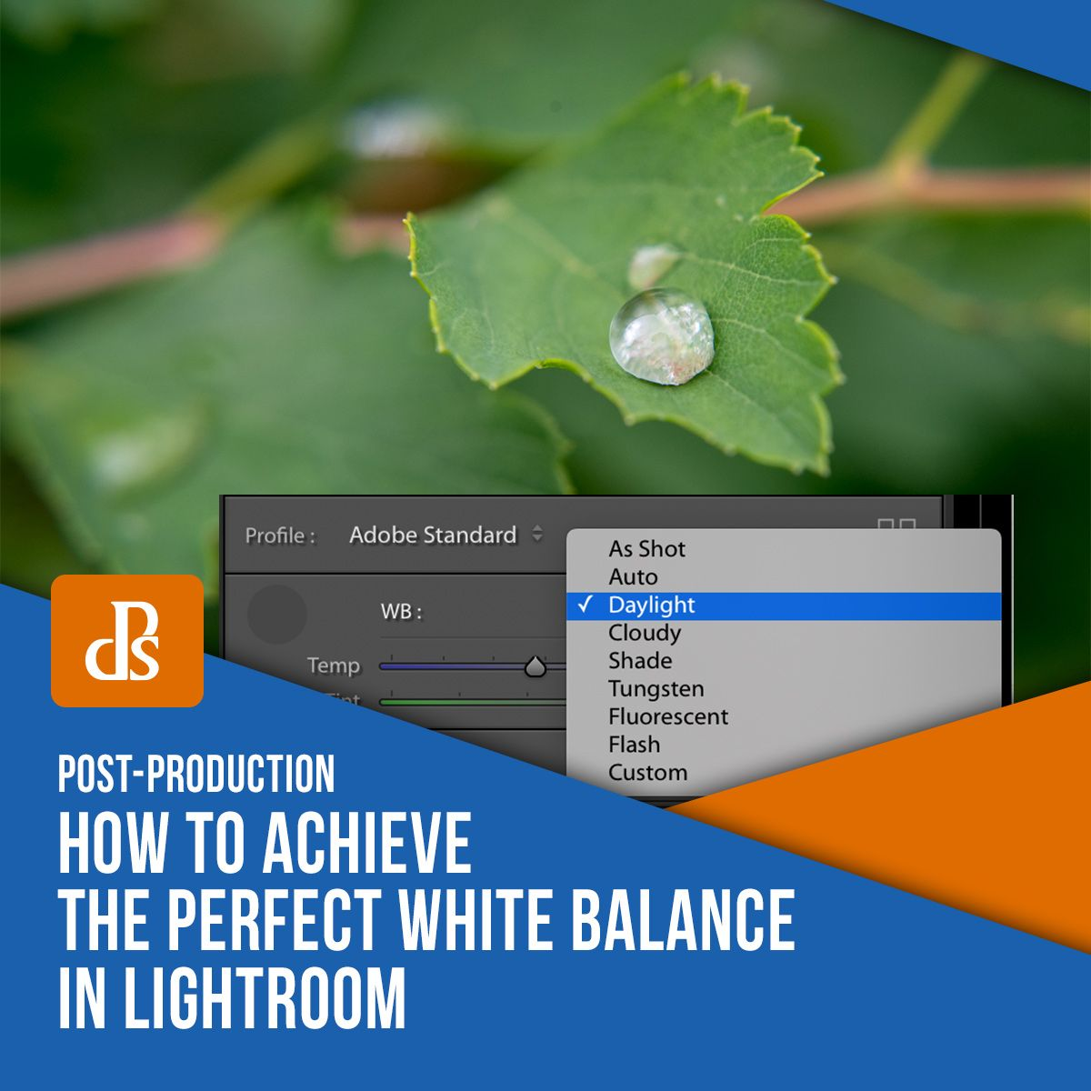 Auto white balance lightroom