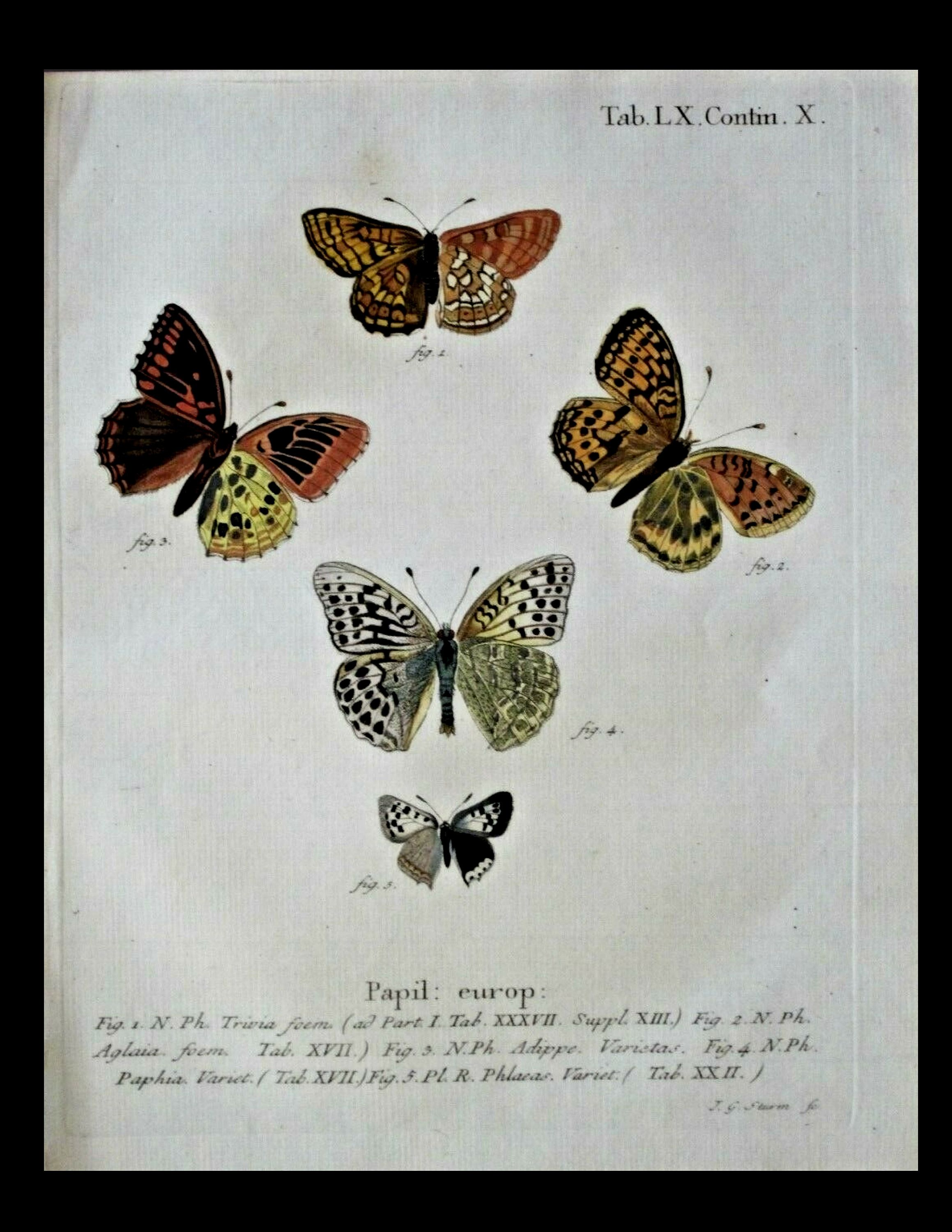 Butterfly plate Lepidoptera Rare 19th Century Original Antique Butterfly Engraving Antique print Butterfly Moths
