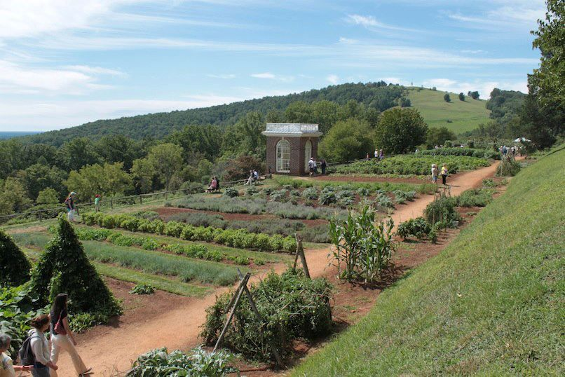 Thomas Jefferson's vegetable garden at Monticello, it is 1,000 feet long. Jefferson grew 250 varieties of more than 70 different species of vegetables, precisely recording the details of their growth.