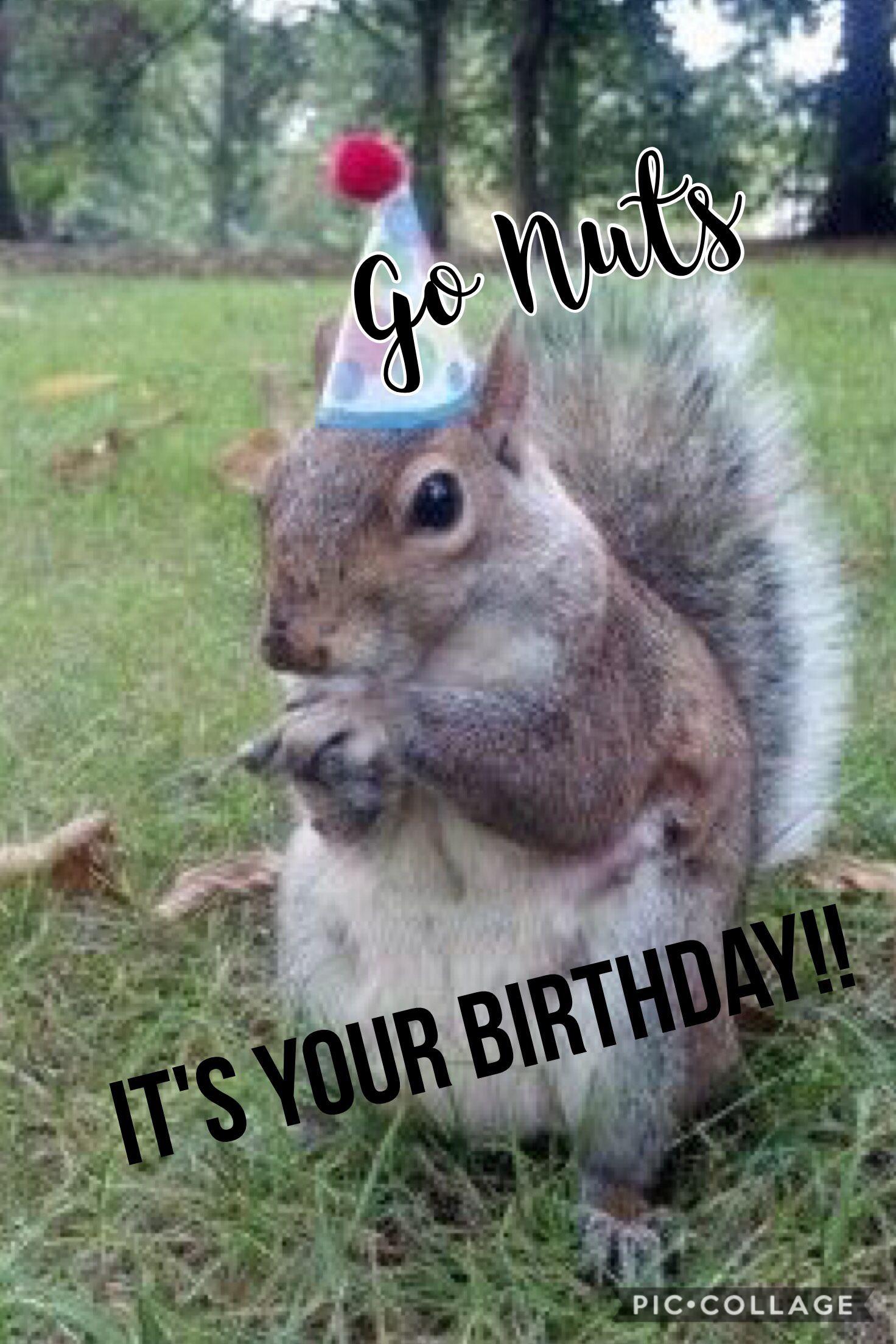 Go nuts its your birthday happy birthday squirrel