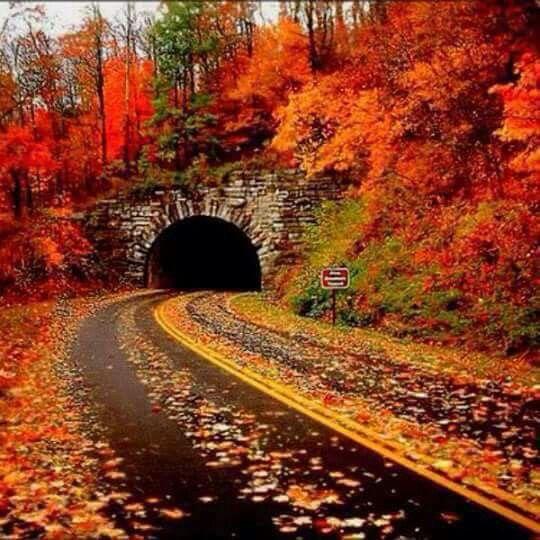 tunnel  spruce pine   switzerland autumn 540 x 540 · jpeg