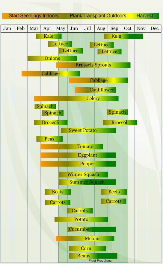 Succession Planting Tips Vegetable Planting Calendar Planting Vegetables Planting Calendar