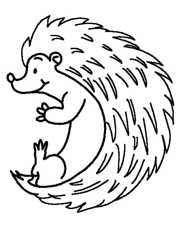 Hedgehog Rolling Down Coloring Pages Coloring Sun In 2020 Coloring Pages For Kids Coloring Pages Colouring Pages