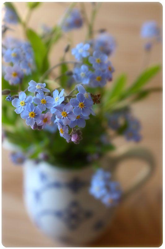 Pin Af Anna Vesela Pa Teacup Gardens I 2020 Blomster Billede
