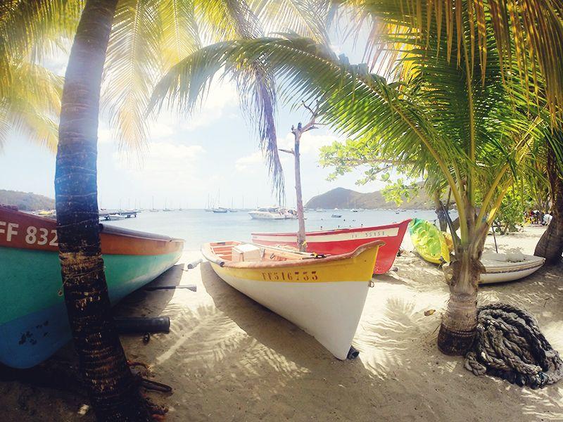 On va voir les tortues en #Martinique ? #grandeanse