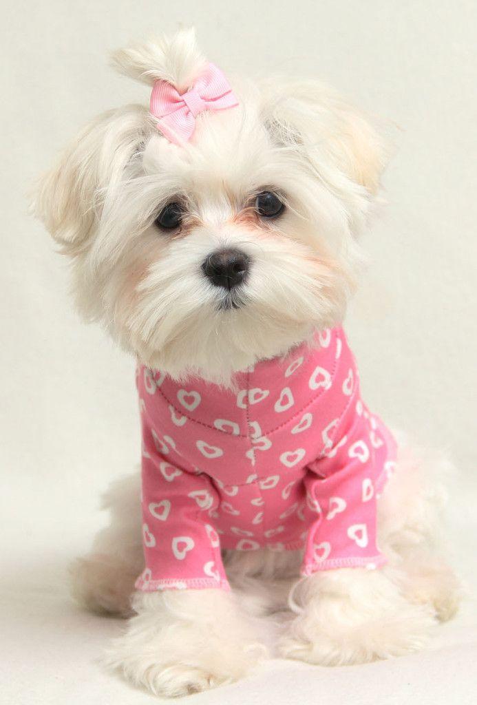 Pink Hearts Mock Turtleneck Shirt- PC Dog