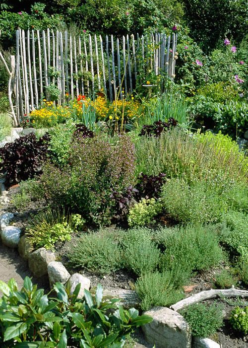 Photo of Creating an herb garden: the most important tips – DAS HAUS