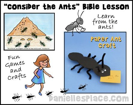 Free Sunday School Lesson - Consider the Ants Bible Lesson