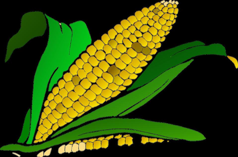 corn clipart harvesting crop 1260 patsy pinterest maize plant rh pinterest co uk ear of corn clipart black and white ear of corn clipart black and white
