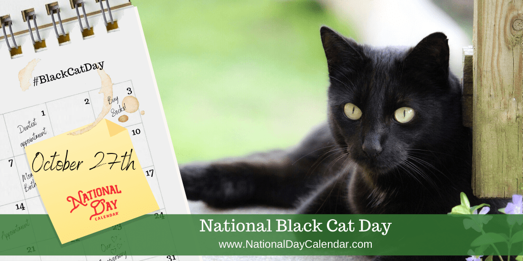 Today S Trivia Black Cat Day National Black Cat Day Black Cat