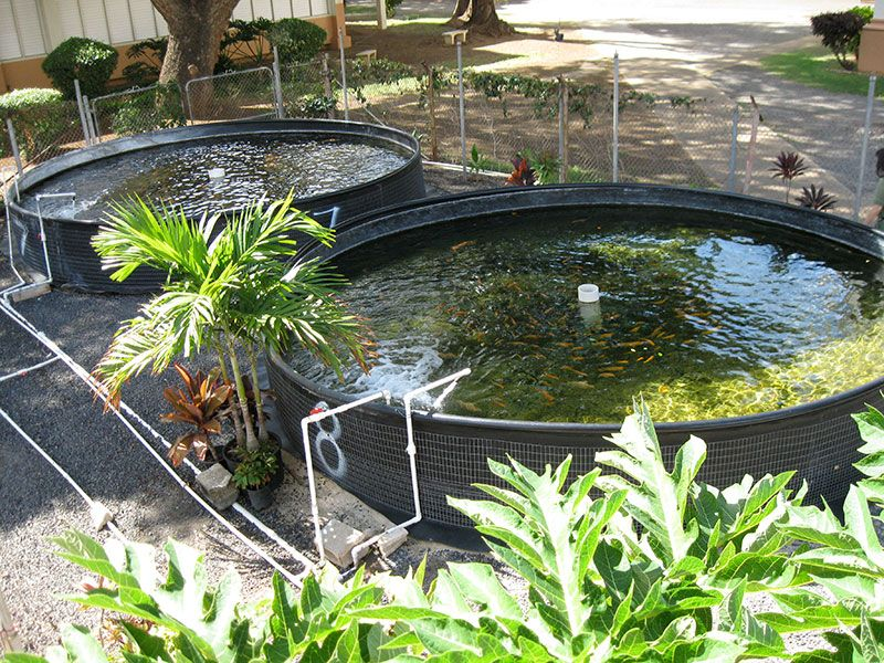 5 things i learned while attempting backyard aquaculture for Hydroponics in koi pond