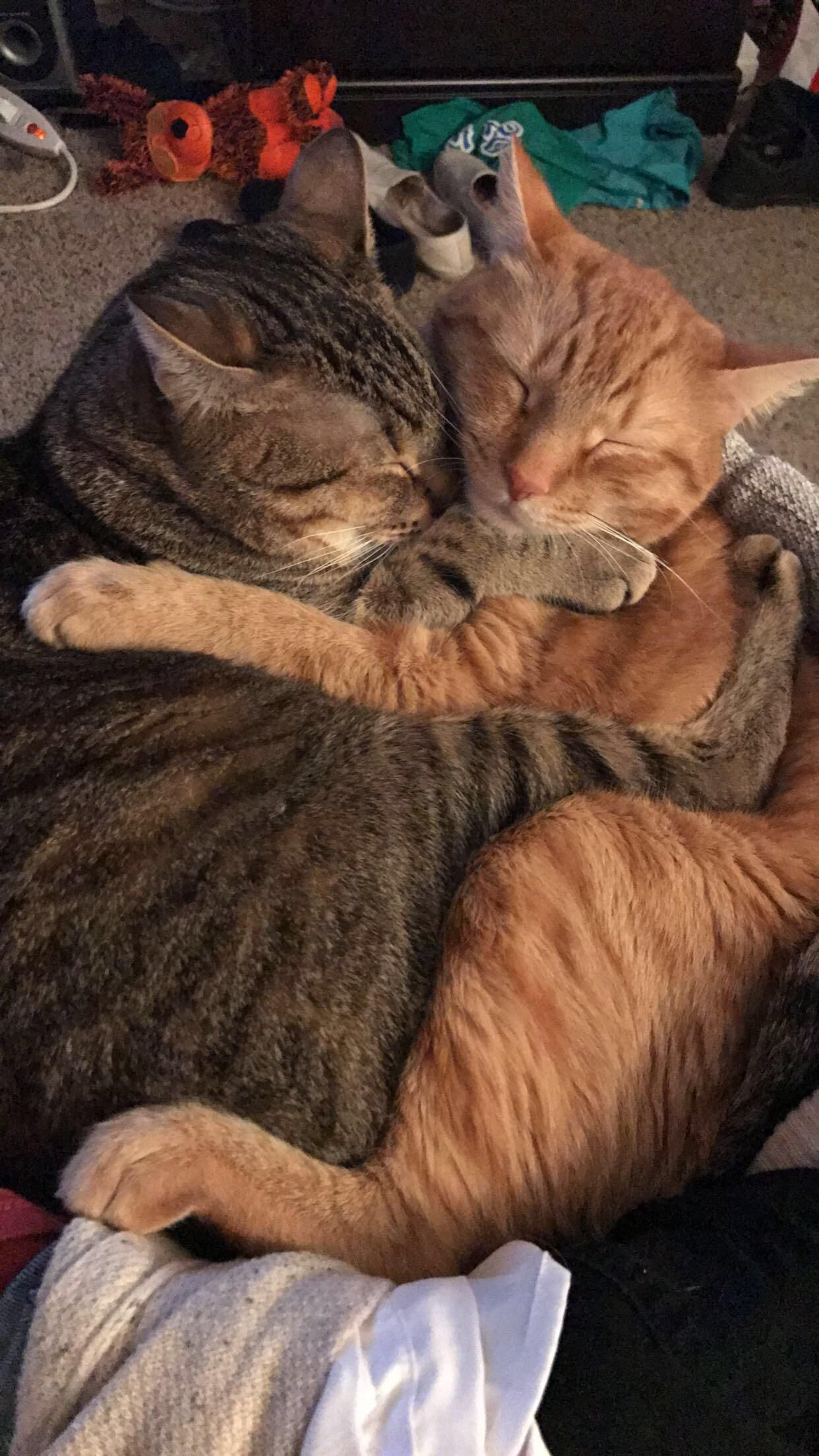 My Sisters Cats love each other