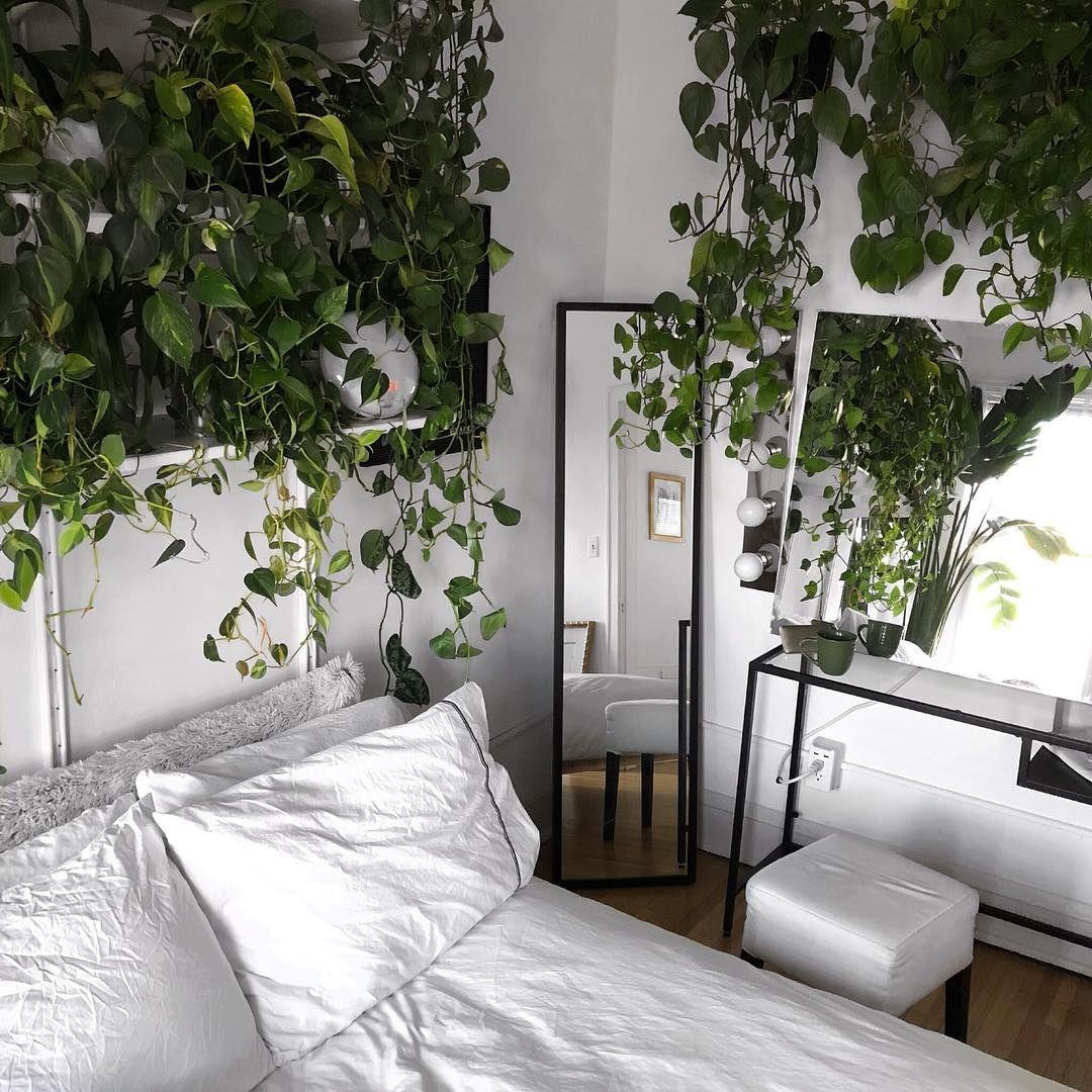 Photo of Questa nuova idea di pianta da appartamento è selvaggia e totalmente realizzabile