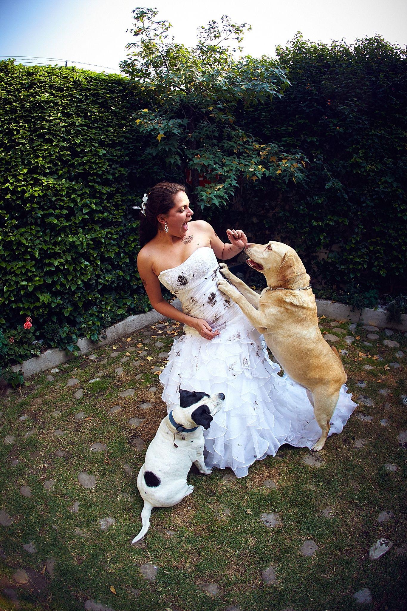 Trash The Dress Dog Dog Dresses Dresses Wedding Dresses [ 2048 x 1365 Pixel ]
