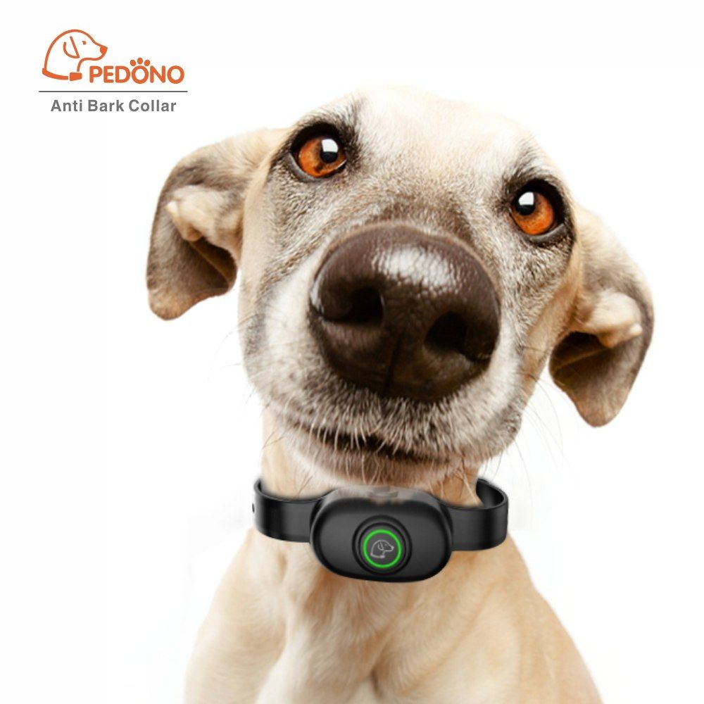 how to train a dog with a shock collar to stop jumping