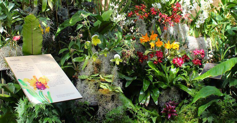 Selby Botanical Gardens Sarasota Fl Must Do Visitor Guides Florida Beach Resorts Botanical Sarasota