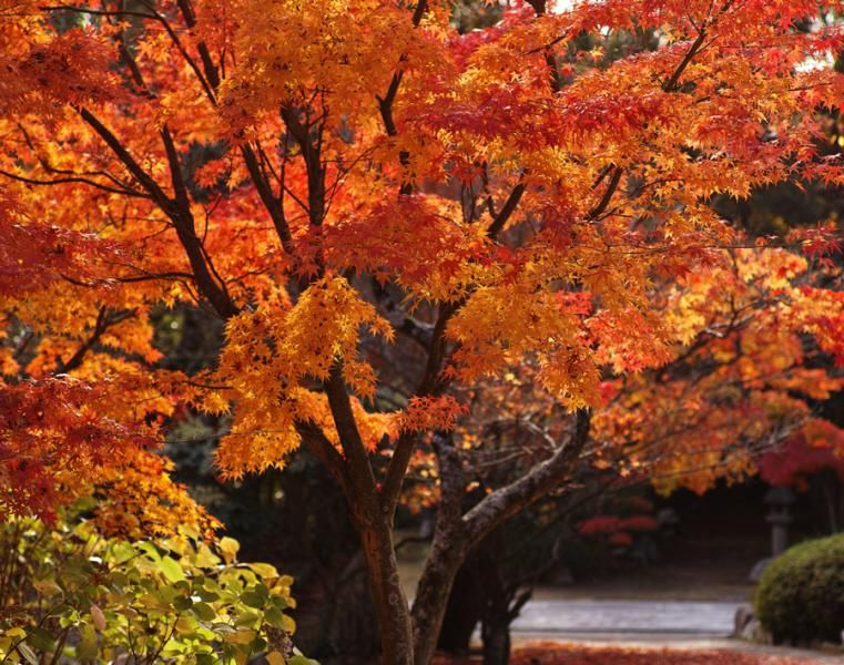 OSU tree planting guide | Garden | Trees to plant, Plants