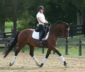 Cartouche- Gorgeous bay Dutch mare by Rousseau out of a Zeoliet mare. Lovely gaits, willing-to-please attitude, sweet temperament, very trainable.