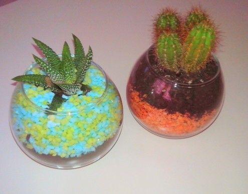 Cactus en terrarios