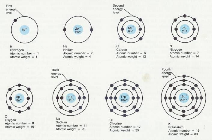 Each of the chemically identical atoms of an element with