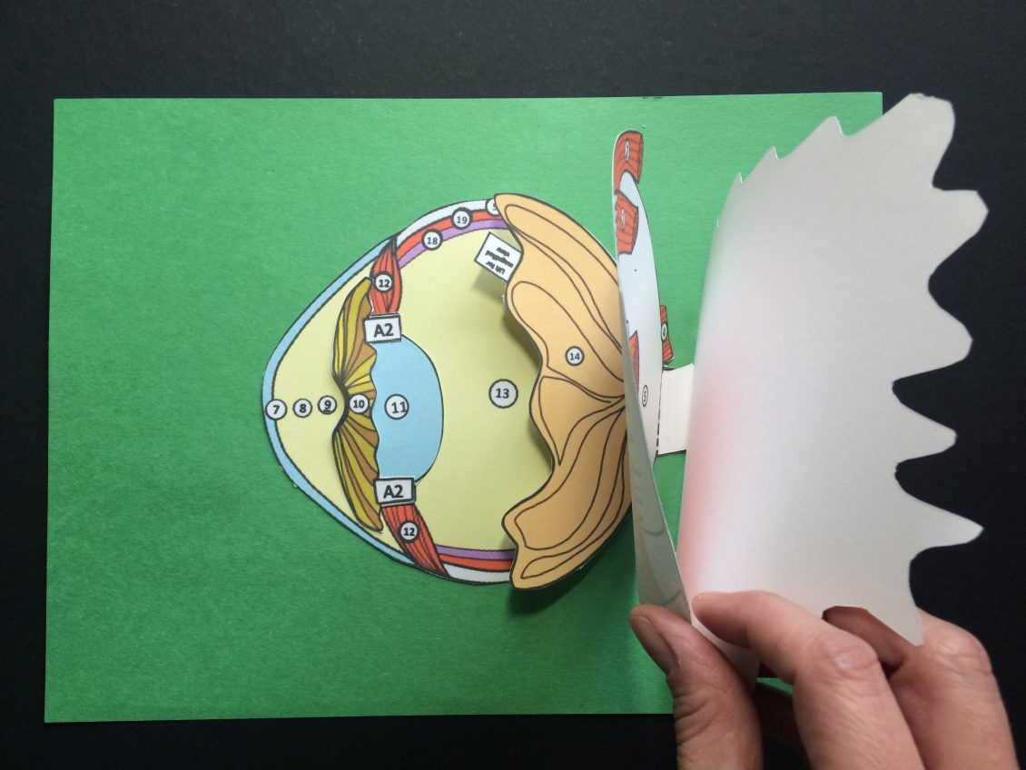 Why You Should Use Paper Scienstructable 3d Dissection