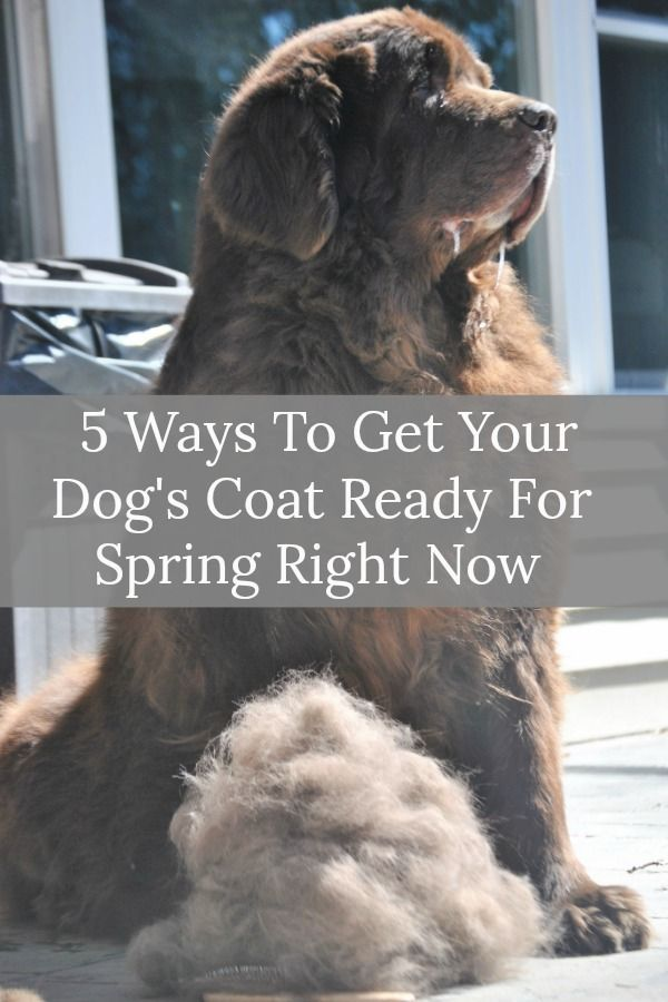 5 Ways To Get Your Dog S Coat Ready For Spring Now Dogs Dog